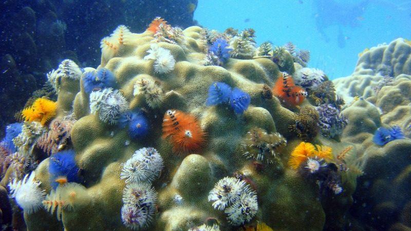 Tips Memelihara Ikan Hias Air Laut