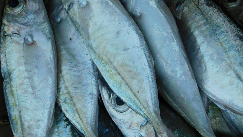 7 jenis ikan asin Recommended dikonsumsi
